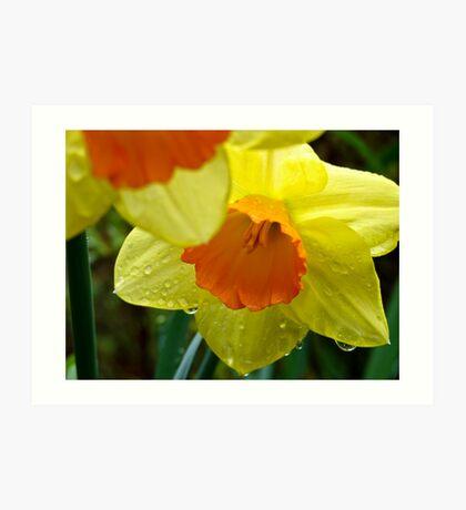 Daffodils in Spring Rain Art Print