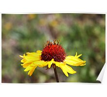Great Blanket Flower Poster
