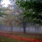"""""""October Morning"""" by Doyle  McClung"""