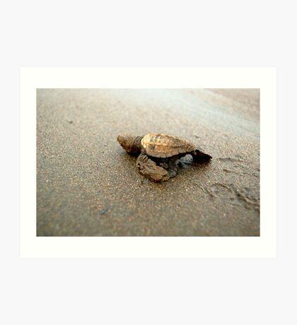 Baby Turtle Unedited Art Print