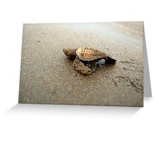 Baby Turtle Unedited Greeting Card