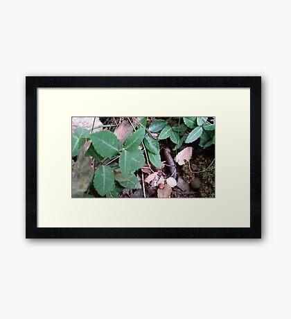 Hidden in the Leaves Framed Print
