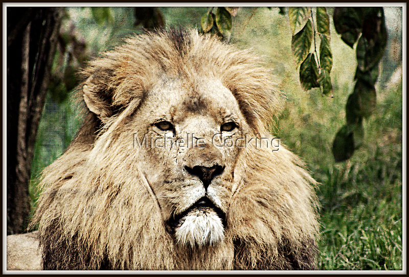 King of the Jungle by Michelle Cocking