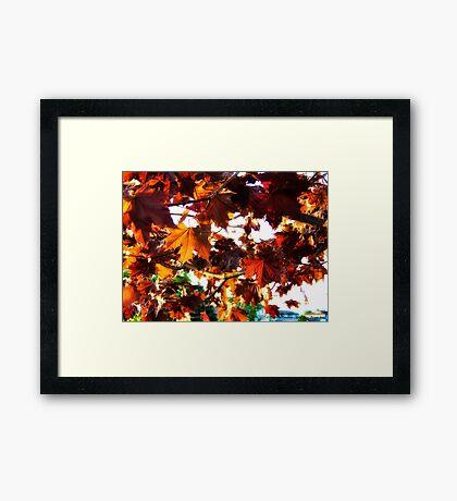 Fall Colors 2 Framed Print