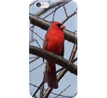 Northern Cardinal (iPhone Case) iPhone Case/Skin