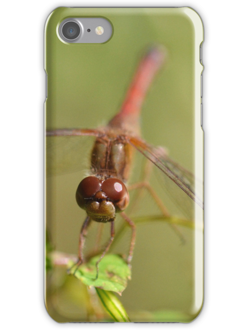 Meadowhawk (iPhone Case) by William Brennan