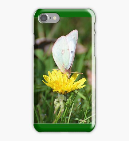 Sulfur Butterfly (iPhone Case) iPhone Case/Skin