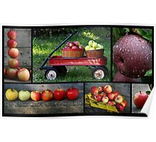 Apples Composite  Poster