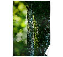 Rainforest Moss Poster