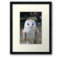 Barn Owl portrait Framed Print