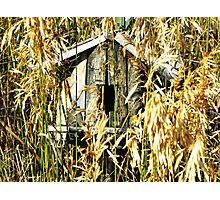 Birdhouse Photographic Print