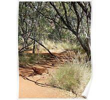 pathways, canyon walk 5 Poster