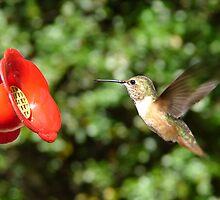 Happy Hummingbird by LadyEloise