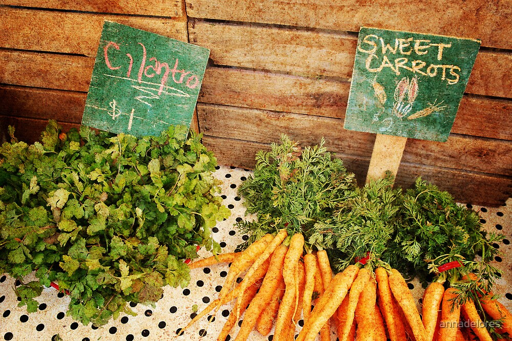 Cilantro & Carrots by annadelores