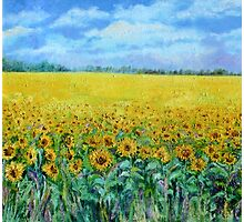 Sunflower Field Under Blue Skies Photographic Print