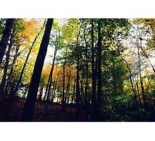 Lines of Autumn Photographic Print