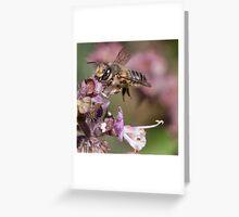 African honey bee Greeting Card