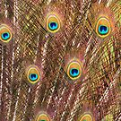 Peacock Feathers by OzShell