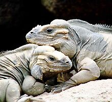 Rhinoceros Iguana by Maddy Storm