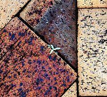 Survivor beneath my feet by Robyn Williams