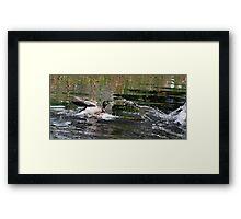 the old splash attack,,, Framed Print
