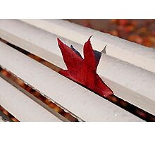 One red leaf inside a white bench Photographic Print