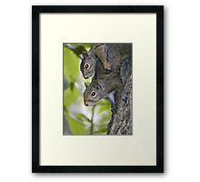 Sibling squirrels Framed Print