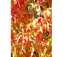 FALL COLOUR AT THE GETTY, PANASONIC LUMIX Photographic Print