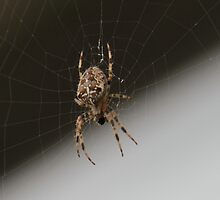 Boris - The Spider by Dave Holmes