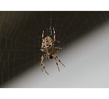 Boris - The Spider Photographic Print