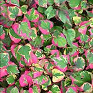 "Houttuynia cordata ""Chameleon"" for iPhone by Philip Mitchell"
