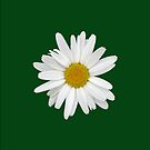Marguerite on dark green for iPhone by Philip Mitchell