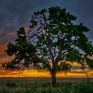 Tree Pano by Scott Sheehan
