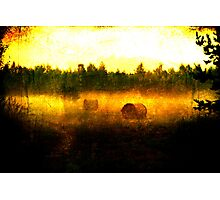 Hayballs Gone Wild Photographic Print