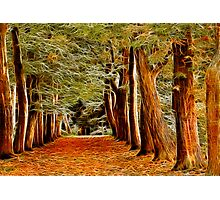 Fractalius Autumn Walkway Photographic Print