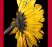 iPhone Case - Yellow Gerbera by Vicki73