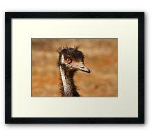 Young Emu Framed Print