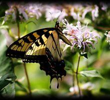 Butterfly Flutters in Summer by dawnderby
