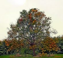Losing its autumn glory by missmoneypenny