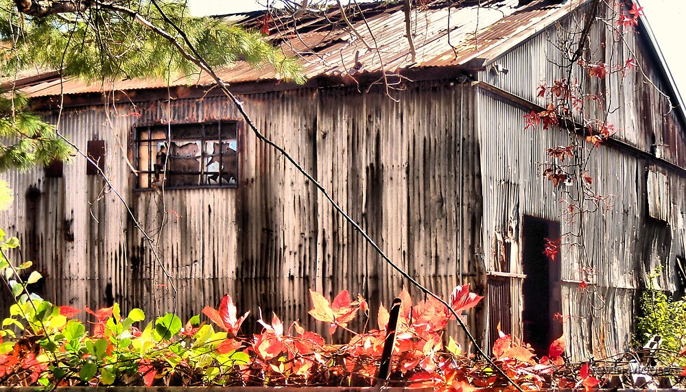 Tin Roof Rusted By Kevin Moore Redbubble