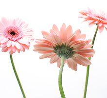 Flower by John Wiersma