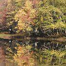 Eels Creek Conservation Area, Apsley Ontario Canada by Tracy Faught