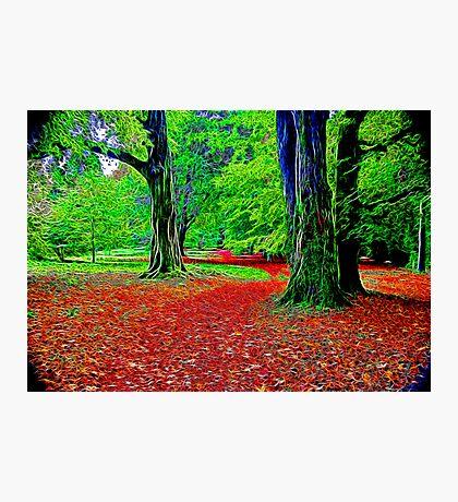 Fractalius Woods Photographic Print