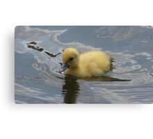 Duckling Canvas Print