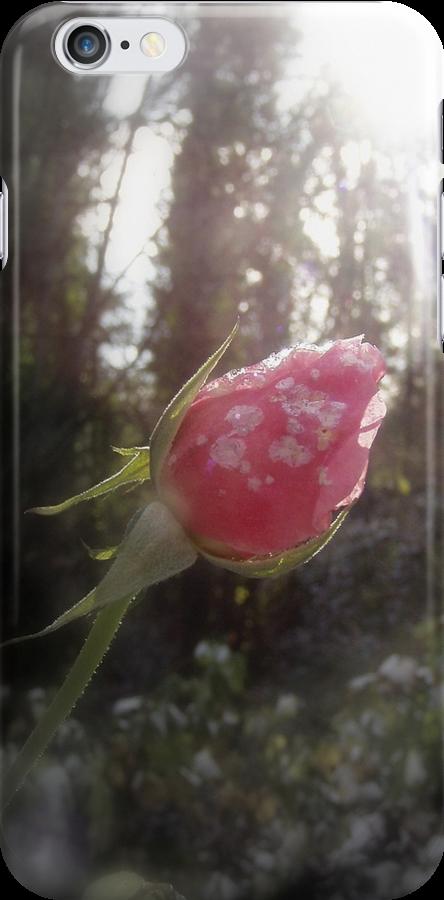 rose in the snow by Dawna Morton