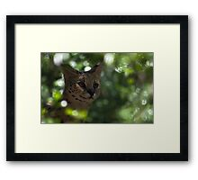 Looking at you . Framed Print