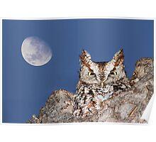 Eastern Screech Owl (Megascops asio) Poster