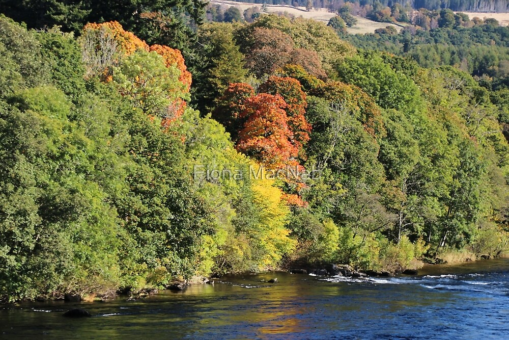 Gilmpses of autumn by Fiona MacNab