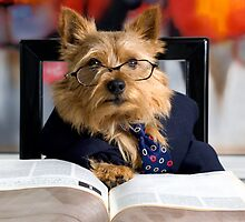The Norwich Terrier Math Teacher by susan stone