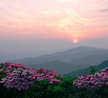 Rhododendron Sunrise by Annlynn Ward